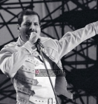 Freddy-Mercury